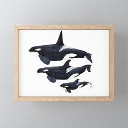 Orca (Orcinus orca) Framed Mini Art Print