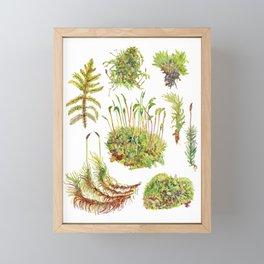 Moss Framed Mini Art Print