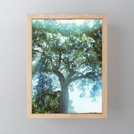 Ramona Oak Tree Framed Mini Art Print