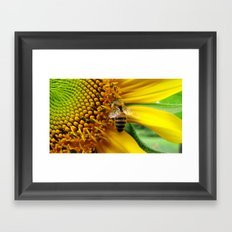 Pollination Framed Art Print