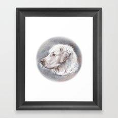Golden Retriever Dog Drawing Framed Art Print