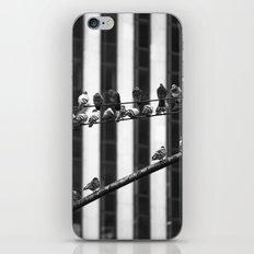 Pigeon Rows iPhone & iPod Skin