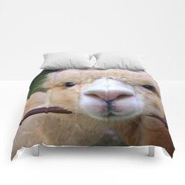 Alpaca Gaze Comforters