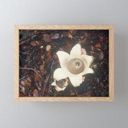 Fungi Forage #5 Framed Mini Art Print