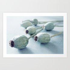 Poppy seed capsule Art Print