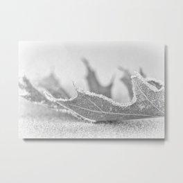 Cold a frosty leaf Metal Print