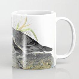 Hooded Merganser - John James Audubon Coffee Mug