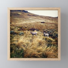 Mountain Sheep Framed Mini Art Print