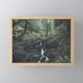 California Redwood Rainforest - Nature Photography Framed Mini Art Print