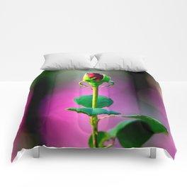 Promise of bloom Comforters