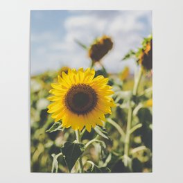 Allora | Sunflowers Poster