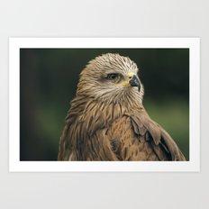 Power Bird II Art Print