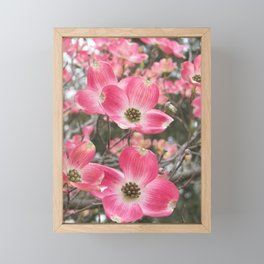 quixotic pink dogwood Framed Mini Art Print