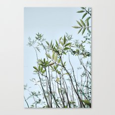 Willow Pattern Canvas Print