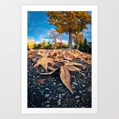 Fisheye Autumn  Art Print