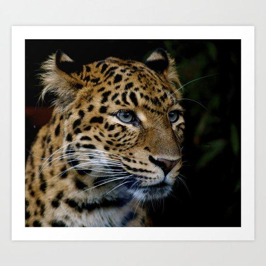 Chinese panther cub II Art Print