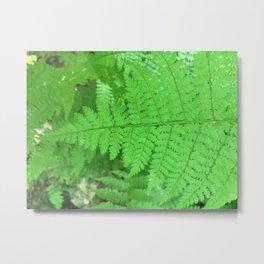 Green Fern Blurr Metal Print