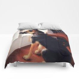Squirrel Sentry Comforters
