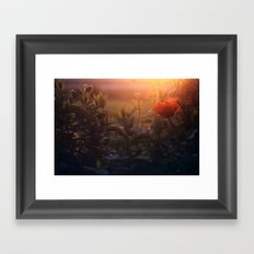 Summer Poppy Framed Art Print