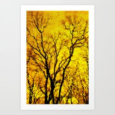 Morning Tree's Art Print