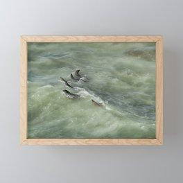 Sea Lions Cavorting in a Green Sea Framed Mini Art Print