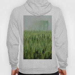 Crop Hoody
