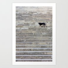 Doge on stairs Art Print