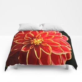 Aurora Comforters