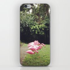 Flamingos iPhone & iPod Skin