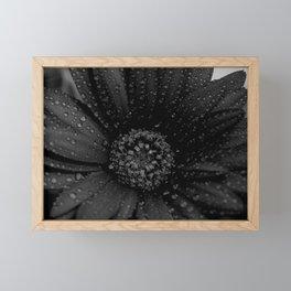 Daisy (Dark Edit) Framed Mini Art Print