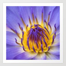 The Lotus Flower Art Print