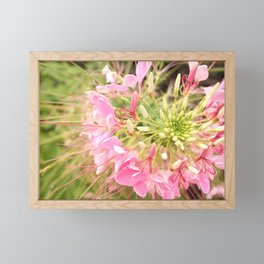 Flower Firework Framed Mini Art Print