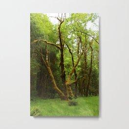 A Moos Laden Tree Metal Print