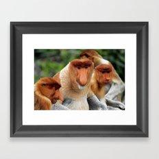 Proboscis Monkey Framed Art Print