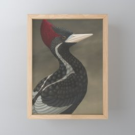 Ivory-billed Woodpecker (Campephilus principalis) Framed Mini Art Print