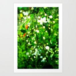 Spring hiing Art Print