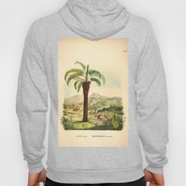 Vintage Botanical illustration, 1916 (Palm) Hoody