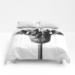 Karl Blossfeldt Botanical Print III Comforters