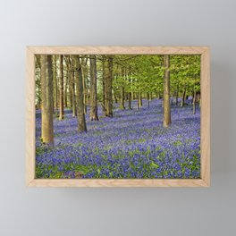 Bluebell Woods Grey's Court Oxfordshire England Framed Mini Art Print