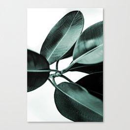 Minimal Rubber Plant Canvas Print