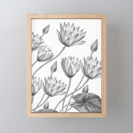 Water Lily Black And White Framed Mini Art Print