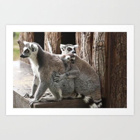 Ring Tailed Lemurs Art Print