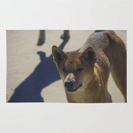Dingo on Fraser island Rug