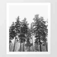 simply trees in winter Art Print