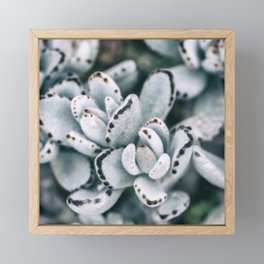 Blue soft and delicate cactus Framed Mini Art Print