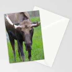 Bullwinkle Bull Stationery Cards