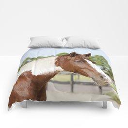 Sonny the Paint Comforters