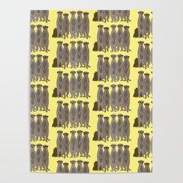 The Meerkat Mob I Poster