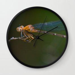 wandering glider Wall Clock