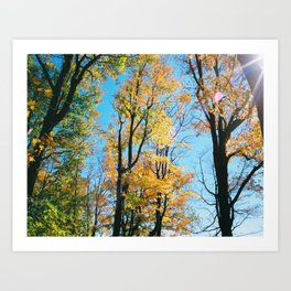 Early Autumn Sunflare Art Print